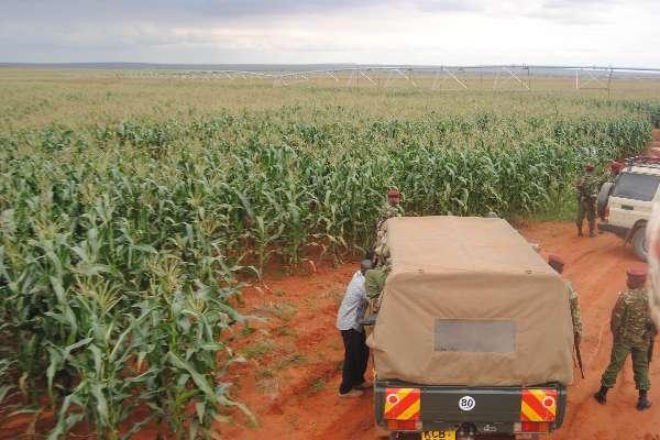 Tana River County: Galana-Kulalu Team Prepare Harvest