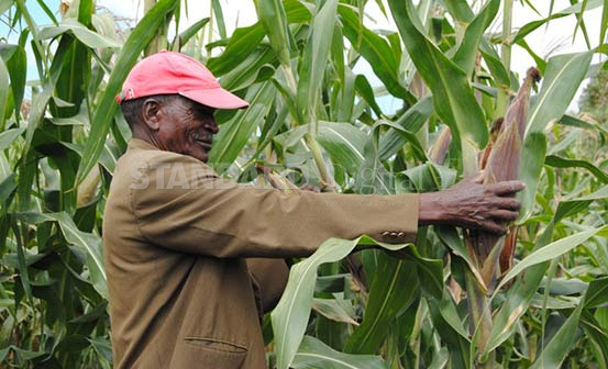 Agri Body To Develop Drought Tolerant Maize Varieties